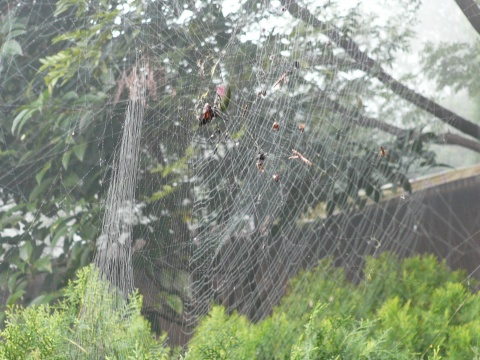 [原创]  毕其一生经营你——蜘蛛网(图) - 幽兰猗猗 - 幽兰的心灵养吧