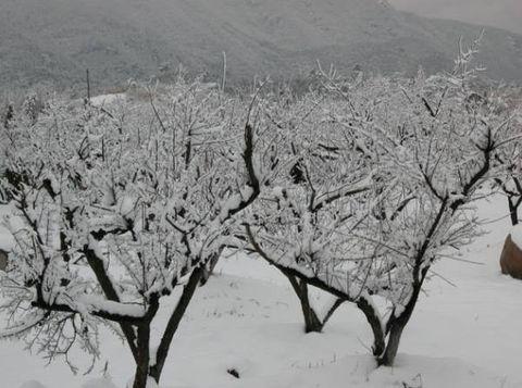 抒情散文:北国雪趣 - 草根 - 草根馨园