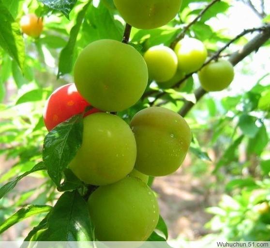 食品营养成分 - zym13205766649 - 能够帮助别人是我的荣幸