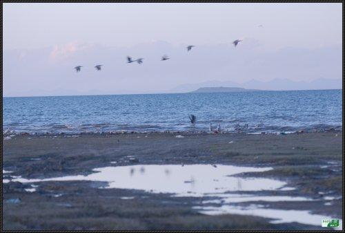 自驾进藏5:青海湖 - 刘兴亮 - 刘兴亮的IT老巢