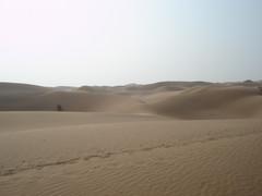大漠颂歌(原创  新诗) - 柳暗花明 - lahm181818的博客
