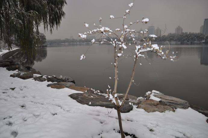 北京玉渊潭的雪景。2009-11-12 - 陶东风 - 陶东风