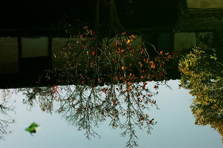【原创】水中的花儿也美丽 - 梦幽幽 - 梦幽幽原创摄影工作室