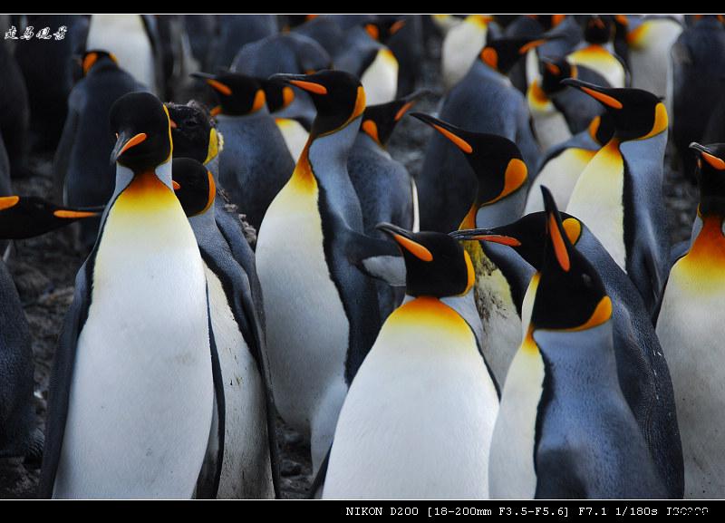 啊,南极(十一) - 西樱 - 走马观景