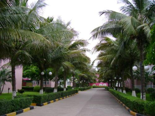海南大学系列1旅游学院--1.林荫小路 - 罗玉树 - 用文字打败时间。