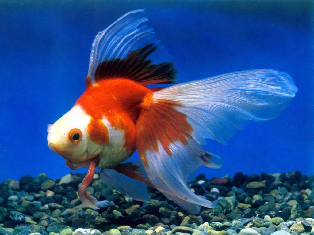鱼和水的故事--完整版 - 海阔天空 - 迎友松 祝五湖四海朋友 亲人们 吉祥如意