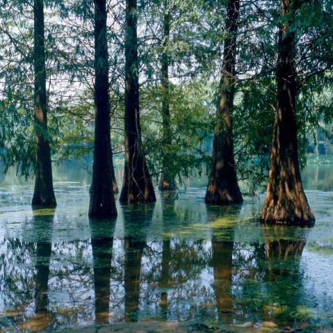 一棵长在水中的树和一条游到岸边的鱼 - 水中树 - 水中树