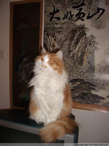 我家的猫        - 英 - 老三届 老知青 老大姐的博客