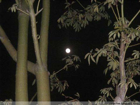 冷月(图) - 温柔的月色 - Cactus的博客