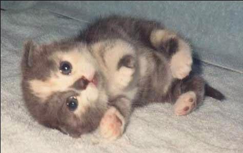 以後要養貓 - 灰色·人生 - 墓