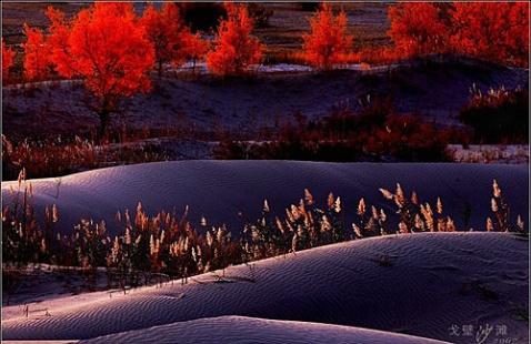 (原创)红柳魂--心路漫漫第三篇 63首 - 疏勒河的红柳 - 疏勒河的红柳【原创博客】