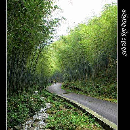 (原创摄影)南山竹海 - 海哥 - 海哥的博客