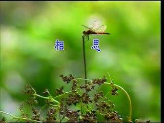http://album.sina.com.cn/pic/485fe2d543fe09ce2cba7