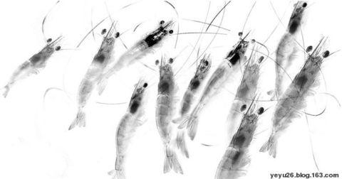 引用 夜语 的 当代水彩画欣赏 - 髯书之歌 - 髯书之歌 书画天地