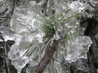 西岘峰雪景(2)——冰松菊