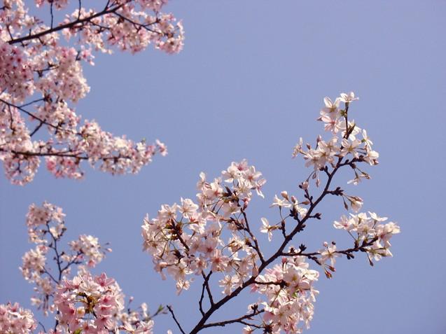 樱花 - 灰色·人生 - 墓