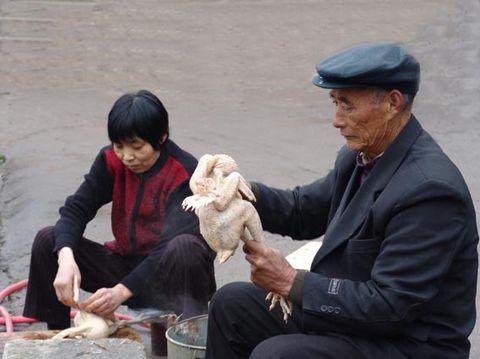 [民俗风情]过年杀鸡宰鹅 - 飞飞 - 蝴蝶飞飞