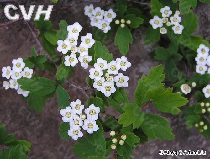 七十二种漂亮的花 - 清影斓韵的日志 - 网易博客 - 风雨春秋 - 风雨春秋