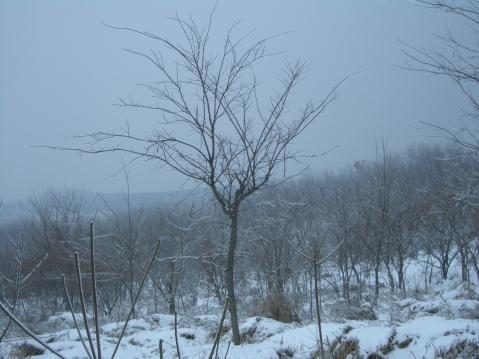 【原创】第 三 场 雪 - 大隐吕山 - 大隐于朝 中隐于市 小隐于野