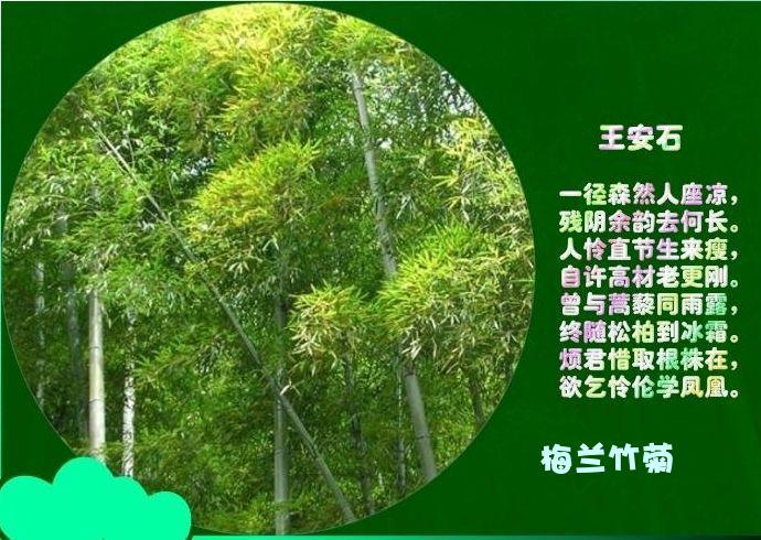 【引用】翠竹园 - 雪儿 - 雪儿的博客