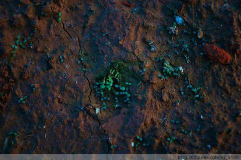 [中国博客艺术促进会.组图诗文]生命的叶子(原创图文) - 山高人为峰 - 且行且吟:山高人为峰