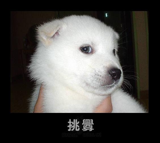 一些可爱的动物表情~~超可爱 - 空谷幽兰 - 空谷幽兰的博客