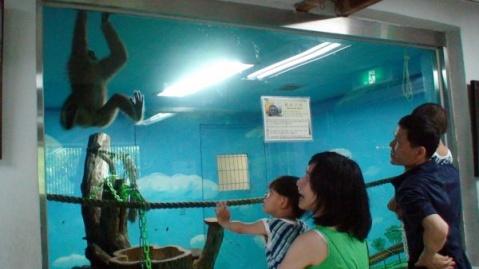 游首尔大[公园]动物园 - 非文 - 非文