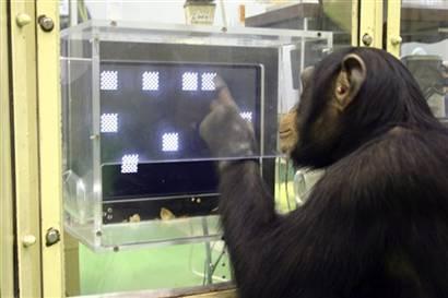 出人意料!史上十大最聪明动物