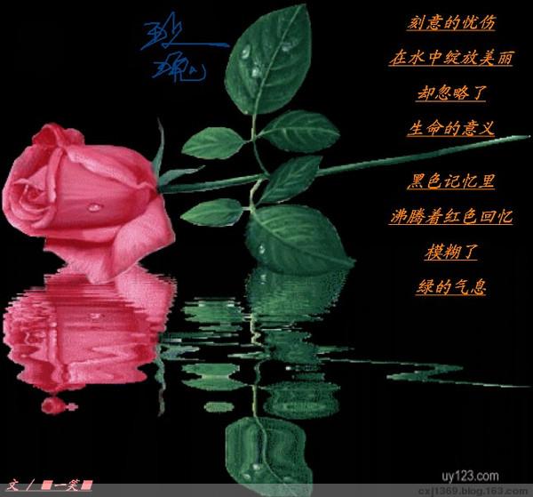 《 玫瑰 》 - ■一笑■ - ⊙⊙⊙一笑⊙⊙⊙
