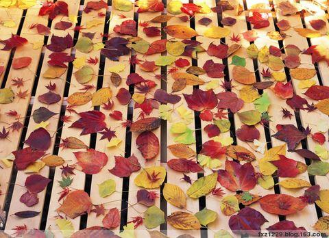 秋天的落叶 - 天然 - 天然的博客