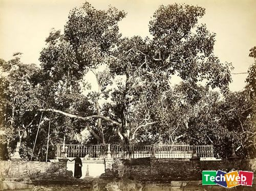 (27)全球10大最奇伟的树木 - 中原风云 - 中原劳务网