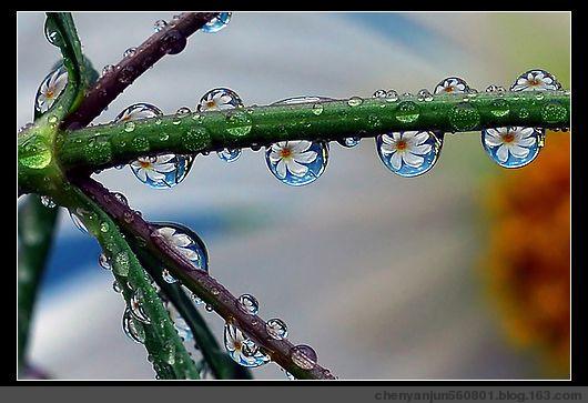 漂亮的微距摄影欣赏 - 烟雨蒙蒙 - 烟雨蒙蒙的博客