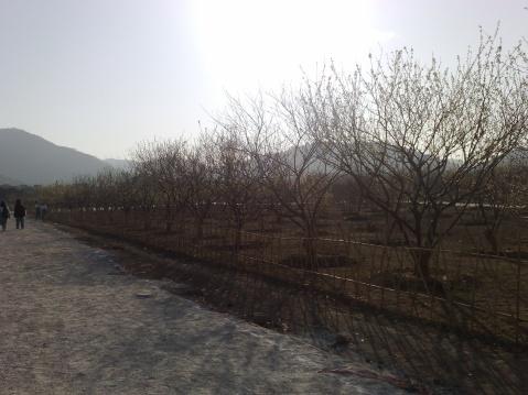 1.17游记:香雪公园+苏元山 - Zomby_Babie~ - NatuRe_RoLL