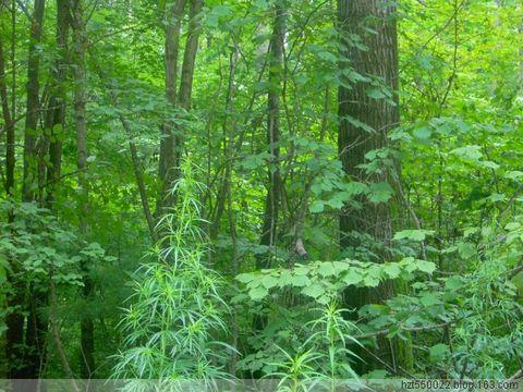 【原创】放歌大森林 - 雨润 - 雨润的博客