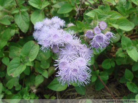又见桃花开 - 淡淡蓝 - 只要心情好,你永远都是漂亮的
