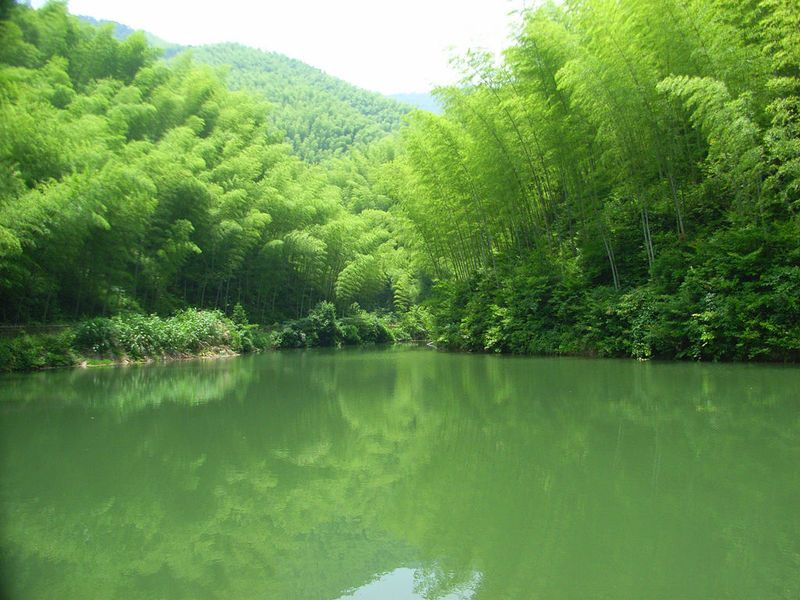 【原创】南乡子---咏翠竹 - 墨飘香 - baihuazhiwai的博客