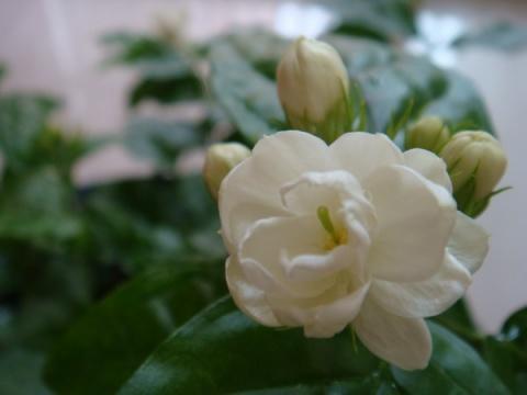 2011年02月13日 - 冰蓝可乐 - 一米阳光的博客