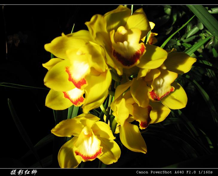 花的世界【原创】 - 红柳 -
