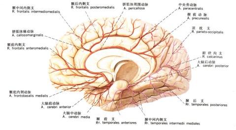 【引用】解剖图谱 - 涛声依旧 - 冀中能源峰峰集团邯郸医院工作博客