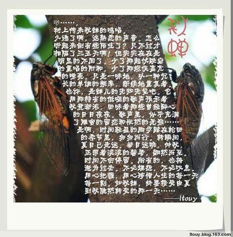 秋蝉 - ltouy - ltouy的博客