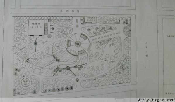 庭院植物单体手绘线稿