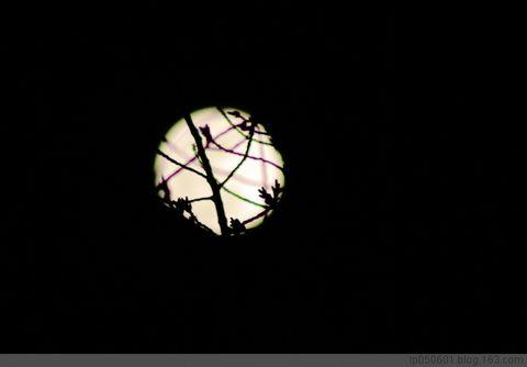 灯节明月 - 时代顽童 - lp050601的博客
