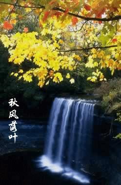 【股海蛙泳】夕阳无限好 2009.2.6 - 木·行者 - 木·行者 刘海戏金蟾