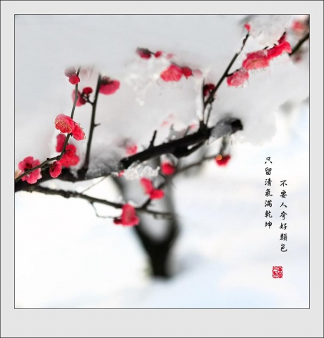 新春感怀《咏梅》原创 - gxh75638孤云野鹤 - 孤 云 野 鹤