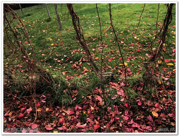 抢拍最后的秋景_行走在西部的草原_新浪博客 - 行走在西部的草原 - 行走在西部的草原