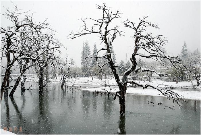 [原创]甘孜行——我的首次摄影之旅 - 迁徙的鸟 - 迁徙鸟儿的湿地