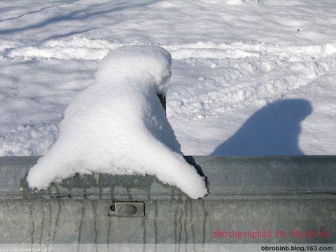 情如白雪 - bbrobinb - 情 如 白 雪 ........