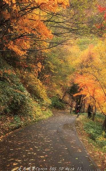 这是个美丽的秋天 - 西樱 - 走马观景