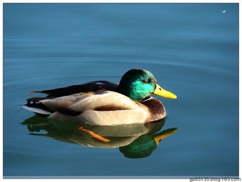 六月荷花摄影词作《如梦令.冬趣》(22) - 六月荷花 - 六月荷花的池塘