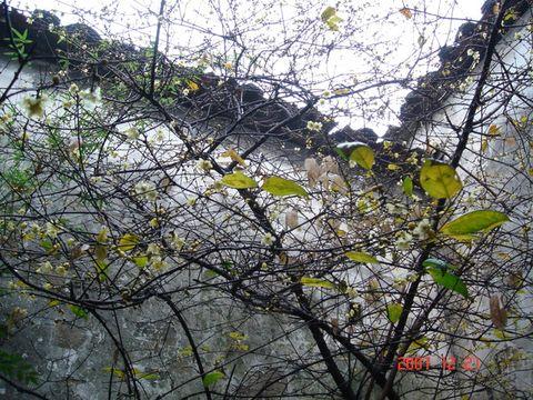 冬至夜雨(原创) - 木头格子 - 下营街三十八号